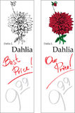 Dahlia - two price tags. For florist stand Stock Images