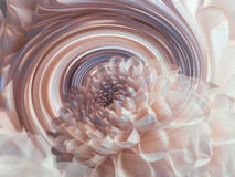 Dahlia white transparent flower on the background of rainbow spiral. floral composition. floral background. Stock Images