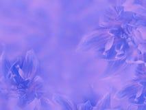 Dahlian blommar blått-rosa färger suddig bakgrund blommor på den suddiga bakgrunden alla några objekt för den blom- illustratione Arkivfoto