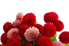 Dahlian blommar buketten Royaltyfri Fotografi