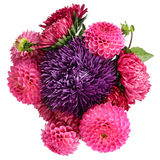 Dahlias and asters Royalty Free Stock Images
