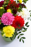 Dahlias bunch Royalty Free Stock Images