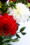 Dahlias bunch Stock Image