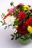 Dahlias bunch Stock Images