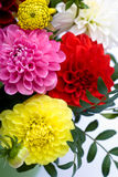 Dahlias bunch Royalty Free Stock Photography