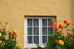 Dahlias dans Bossington sur Exmoor images stock