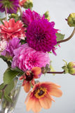 Colorful Dahlias. Different beautiful pink and orange dahlias picked up from garden Stock Photo