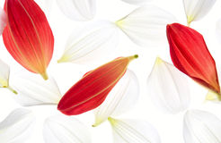 Dahlieblumenblätter Lizenzfreies Stockfoto
