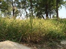 Dahuoquanpark Royalty-vrije Stock Afbeelding