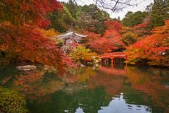 Daigo-ji świątynia z kolorowymi klonowymi drzewami obrazy royalty free