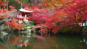 Daigo-ji temple with colorful maple trees in autumn, Kyoto, Japan stock video