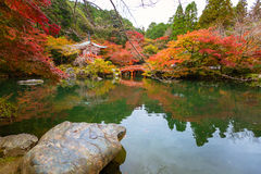 Daigo-ji temple with colorful maple trees in autumn Royalty Free Stock Photo