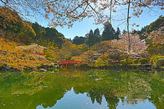 Daigoji Temple Japanese blooming cherry Royalty Free Stock Photography