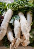 Daikon rädisor på bondens marknad Arkivbild