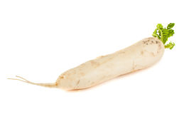 Daikon radish Royalty Free Stock Photos