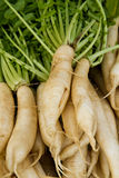 Daikon Radish Bunches Royalty Free Stock Photos