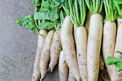 Daikon radish for sale in market. Royalty Free Stock Photography