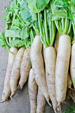 Daikon radish for sale in market. Stock Images