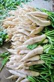Daikon radish for sale in market. Stock Photo