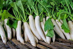 Daikon radish for sale in market. Stock Photos