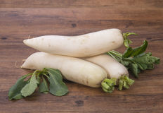 Daikon radish on the wood Stock Image