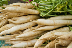 Daikon Radishes. On display at a farmer's market Stock Photos