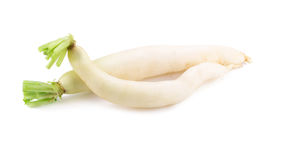 Daikon radishes  on white background. Stock Image