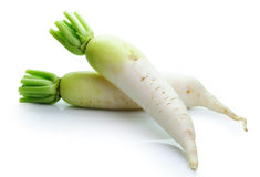Daikon radishes on white background Stock Images
