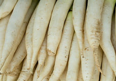 Daikon Stock Photo