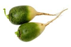 Daikon verde en blanco Foto de archivo