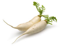 Daikon White Radish Royalty Free Stock Image