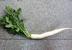 Daikon, white radish Stock Photography