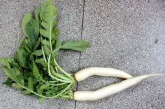Daikon, white radish. Mooli, Raphanus sativus, root vegetable with long lobed leaves and white fleshy root up to 40 cm long, used as salad, cooked as vegetable royalty free stock image