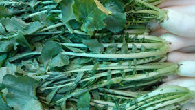 Daikon, white radish. Mooli, Raphanus sativus, root vegetable with long lobed leaves and white fleshy root up to 40 cm long, used as salad, cooked as vegetable stock photography