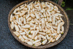 Daikon in the wicker basket on the Vietnamese market Stock Photography