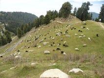 Scenic Mountain. Its a hilltop in Himachal Pradesh ,India Stock Photos