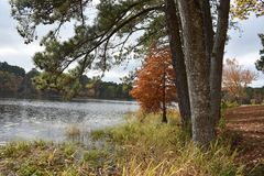 Daingerfield State Park in Daingerfield Texas Nov 25 2018. Took a drive to Daingerfield State Park in East Texas just to see the fall color royalty free stock photos