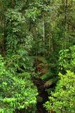 daintree国家公园旅行 库存图片
