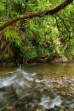 daintree国家公园旅行 库存照片