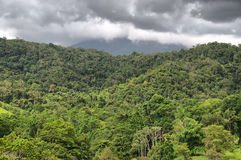 Daintree Stock Photos