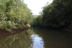 Daintree flod Fotografering för Bildbyråer