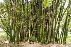 Daintree Forest Tropical Vegetation stockbild