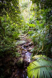 The Daintree Jindalba Boardwalk Stock Image