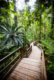 The Daintree Jindalba Boardwalk Stock Photos