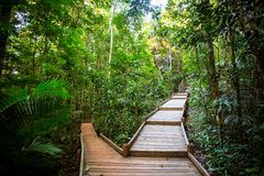 The Daintree Jindalba Boardwalk Royalty Free Stock Photos