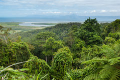 Daintree National Park. Cape Tribulation, Australia Royalty Free Stock Photography