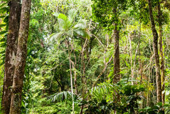 Daintree National Park Royalty Free Stock Image
