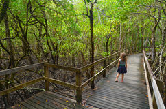 Daintree National Park Queensland, Australia. Girl (age 6) walks on a path in Daintree National Park in the tropical north of Queensland, Australia that was stock photo
