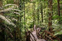 Daintree. National Park, rainforest scenery in Queensland, Australia Stock Image
