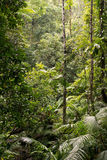 Daintree Royalty Free Stock Photo